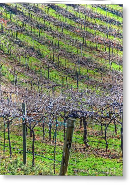 Winery Greeting Card by Kelly Wade