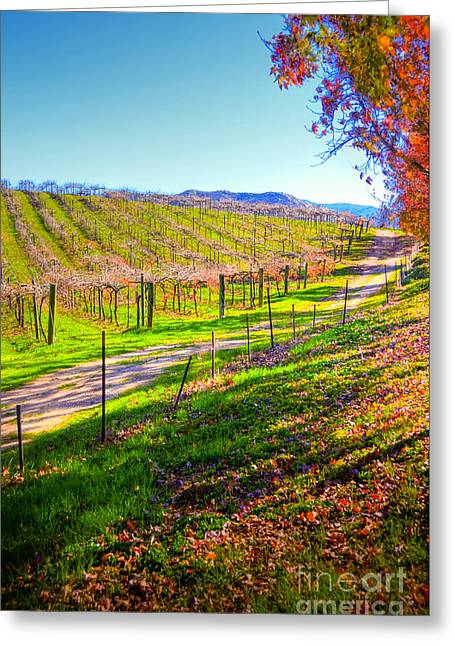 Winery Road Greeting Card by Kelly Wade