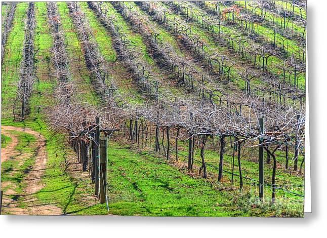 Winery Vineyard Greeting Card