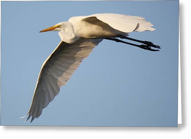 Wing Down Greeting Card by Paulette Thomas