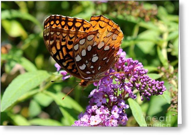 Wings Aglow Greeting Card by Theresa Willingham