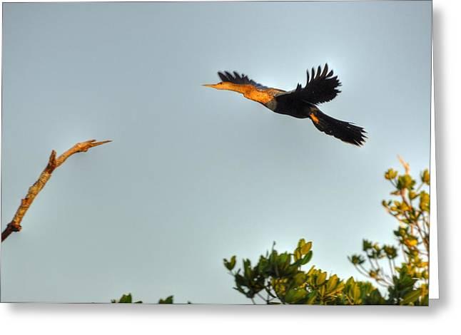Wings Greeting Card by Barry R Jones Jr