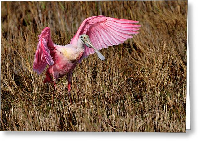 Wings Of Pink And Silk Greeting Card