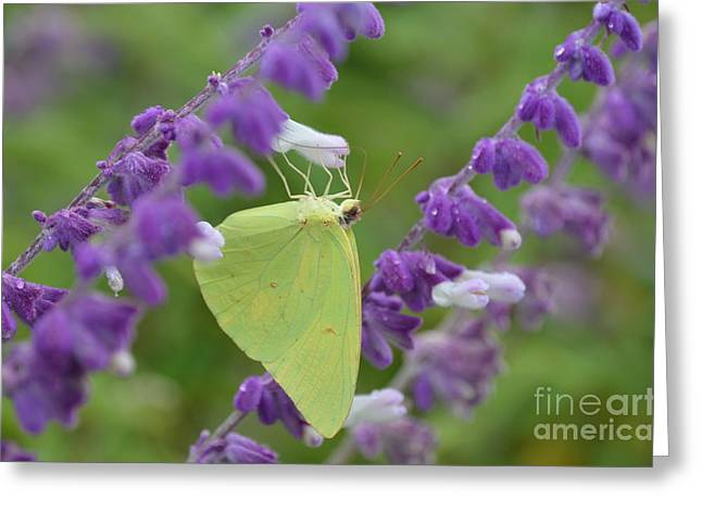 Wings Of Yellow Greeting Card by Kathy Gibbons