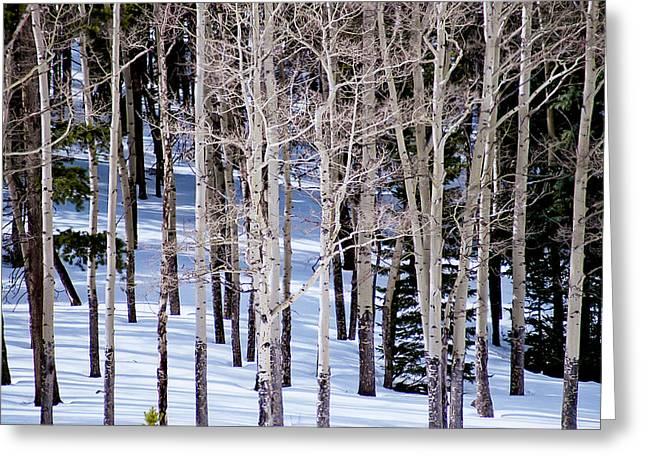 Winter Aspens Greeting Card by Colleen Coccia