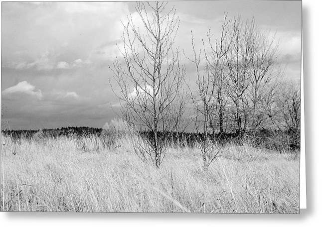 Winter Bare Greeting Card