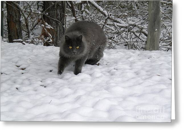Winter Cat Greeting Card by Tessa Priddy