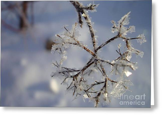 Winter Crystals Greeting Card