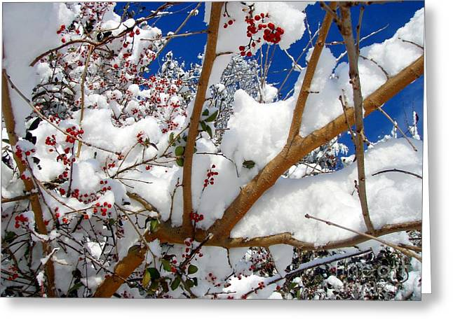 Greeting Card featuring the photograph Winter Day by Kristine Nora
