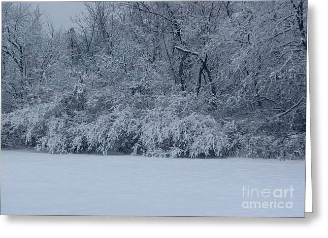 Winter Delight Greeting Card by Cedric Hampton