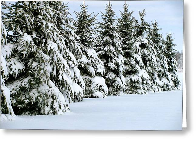 Winter Elegance Greeting Card