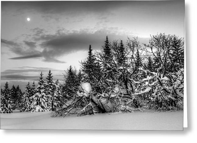 Greeting Card featuring the photograph Winter Evening by Michele Cornelius