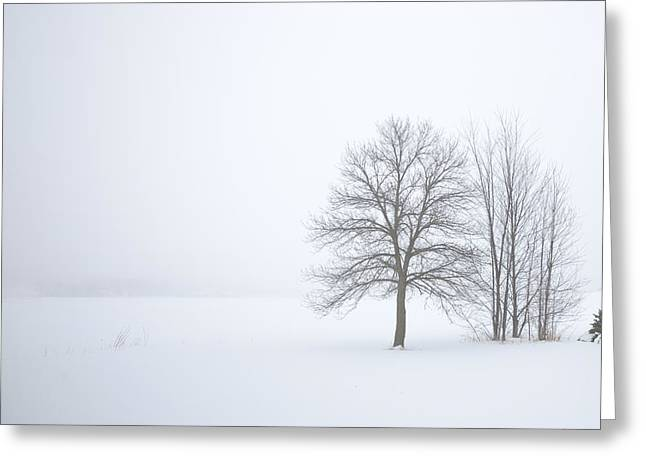 Winter Fog And Trees Greeting Card