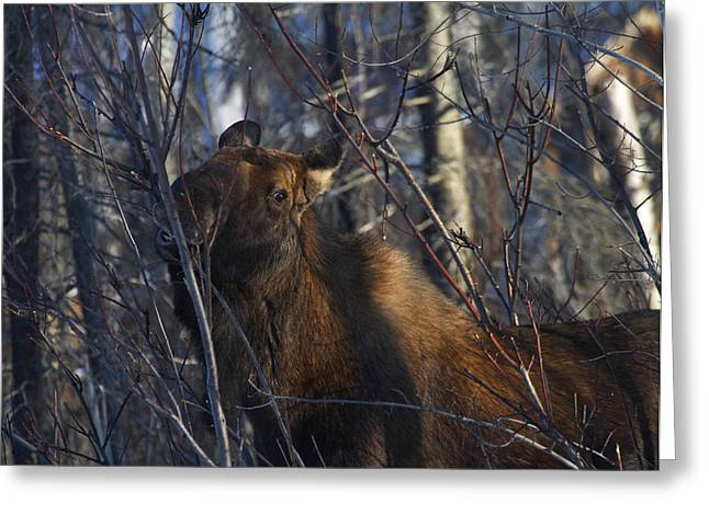 Greeting Card featuring the photograph Winter Food by Doug Lloyd
