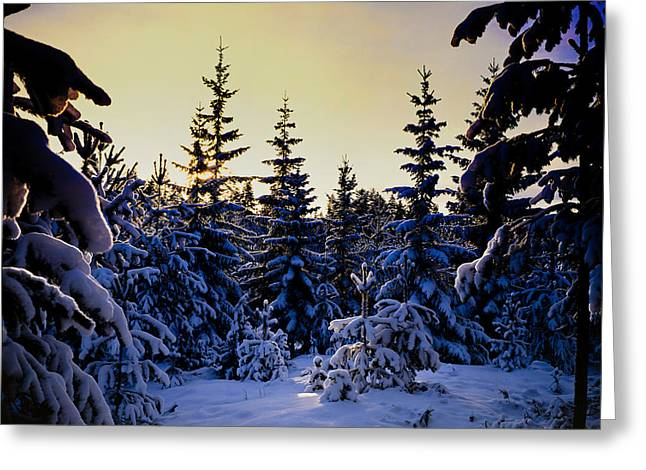 Winter Forest Greeting Card by Hakon Soreide