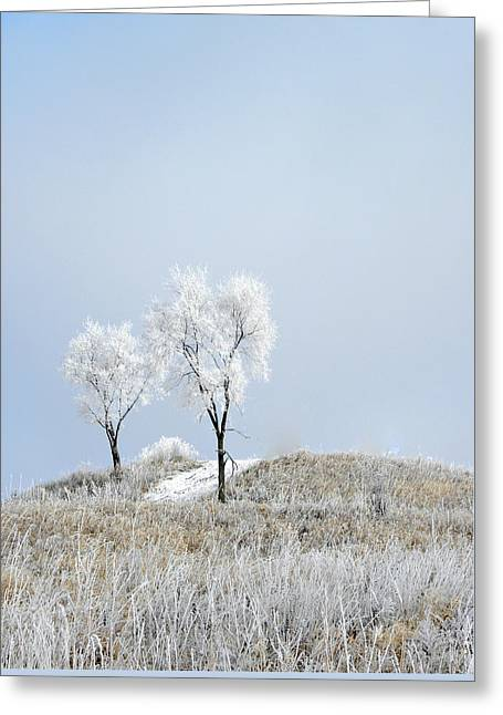 Winter Frost Greeting Card by Julie Palencia