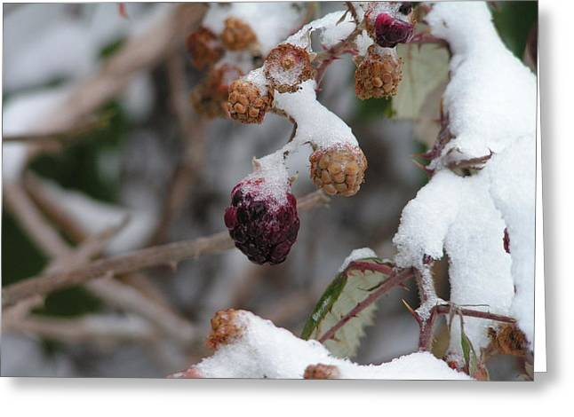 Winter Fruit Greeting Card