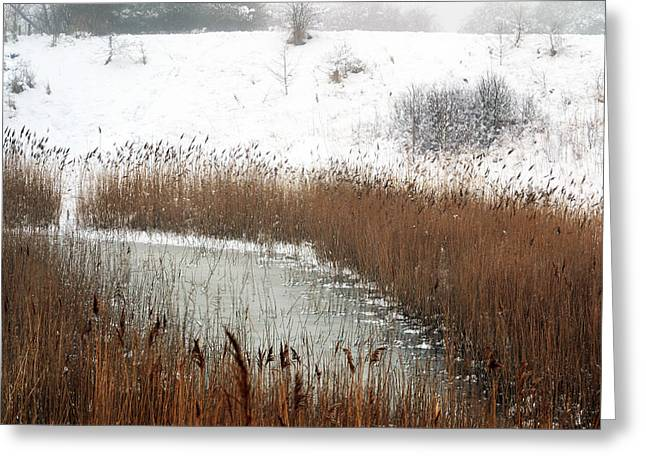 Winter Gold Greeting Card by Terence Davis