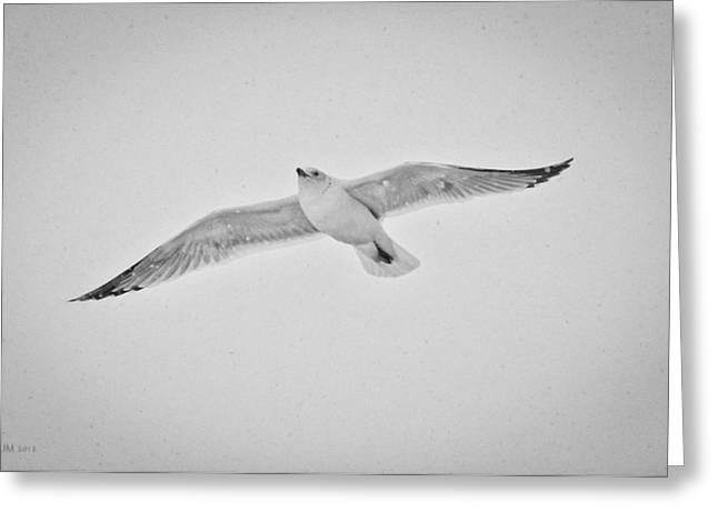 Greeting Card featuring the photograph Winter Gull by Kevin Munro