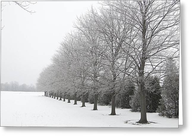 Winter Hoar Frost On Trees Greeting Card