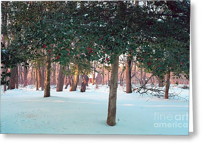 Winter Holly Greeting Card by George Oze