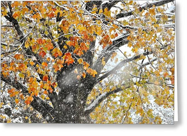 Winter Autumn Collide Greeting Card by JAMART Photography