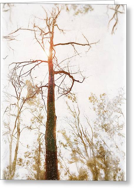 Winter In The Woodlands Greeting Card by Erica Horsley