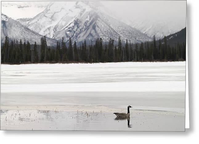 Winter Landscape, Banff National Park Greeting Card by Keith Levit