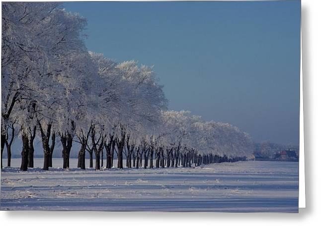 Winter Landscape Near Odense Greeting Card by Sisse Brimberg