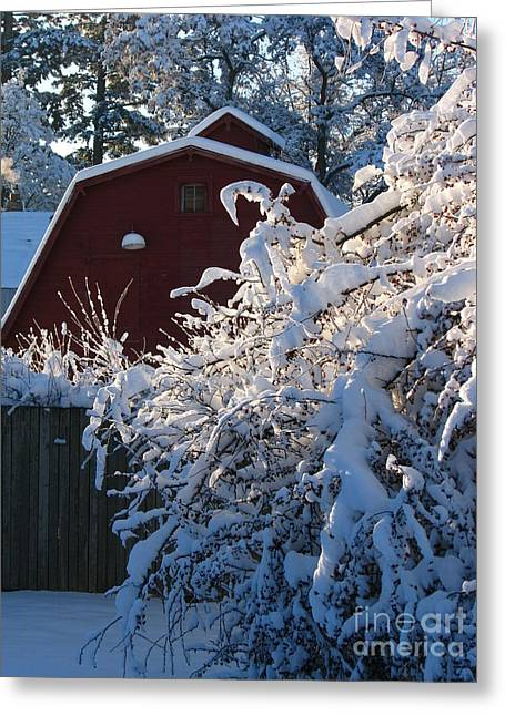 Winter Look Greeting Card by Greg Patzer