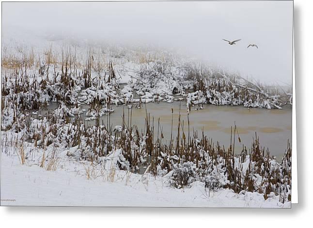 Winter Marsh Greeting Card by Ron Jones