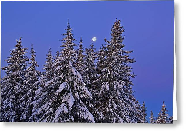 Greeting Card featuring the photograph Winter Night by Michele Cornelius