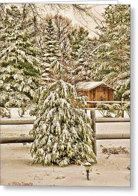 Greeting Card featuring the photograph Winter Pine by Mary Timman