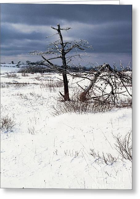 Winter Shenandoah National Park Greeting Card by Thomas R Fletcher