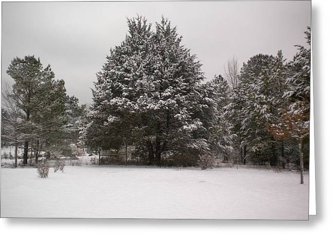Winter Snow Greeting Card by Tessa Priddy
