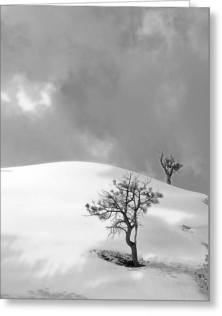 Winter Solitude Greeting Card by Viktor Savchenko