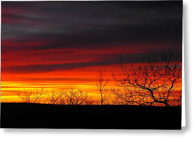 Winter Sunset Greeting Card by Rebecca Cearley