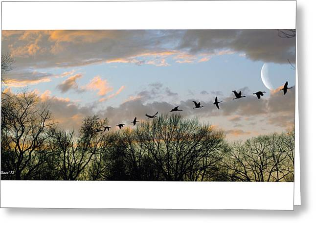 Winter Sunset  Silhouette Greeting Card by Brian Wallace