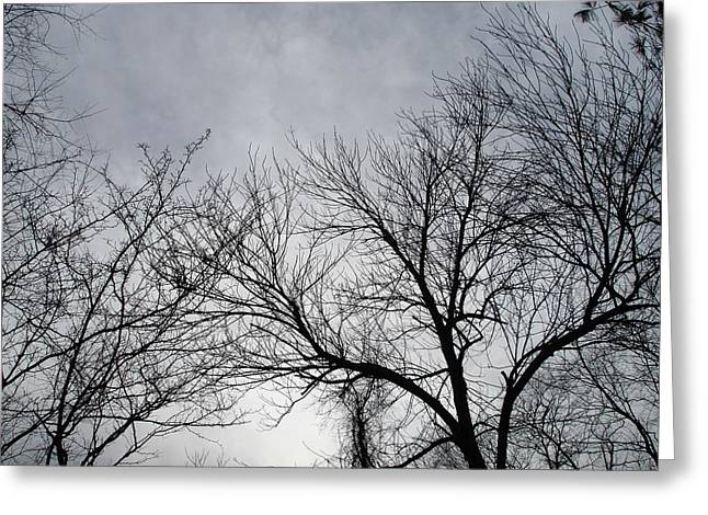 Winter Tree II Greeting Card by Suzanne Fenster