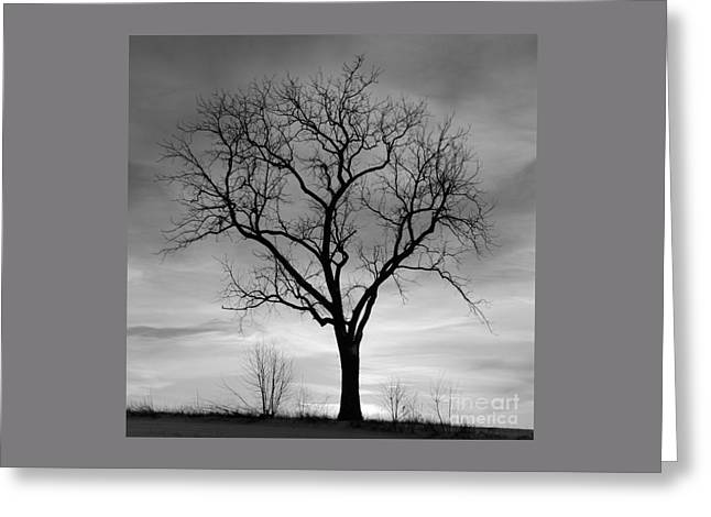 Winter Tree Silhouette Greeting Card by John Stephens