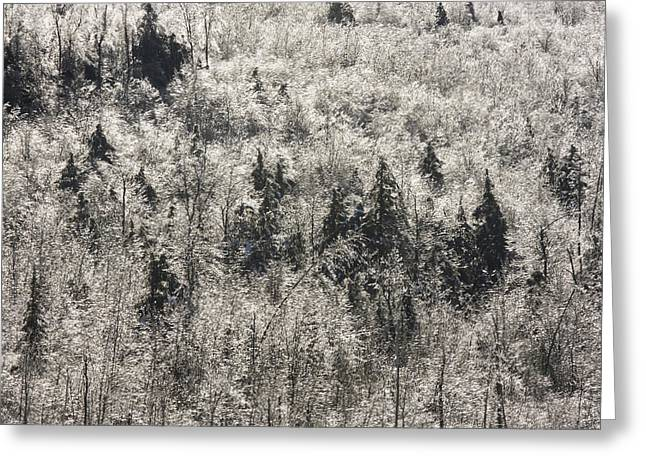Frosty Greeting Cards - Winter Trees Covered In Ice Greeting Card by Keith Webber Jr