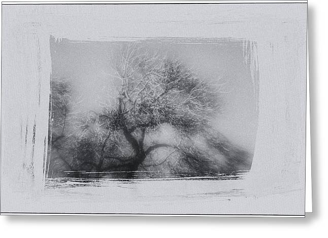 Winter Trees Greeting Card by David Ridley