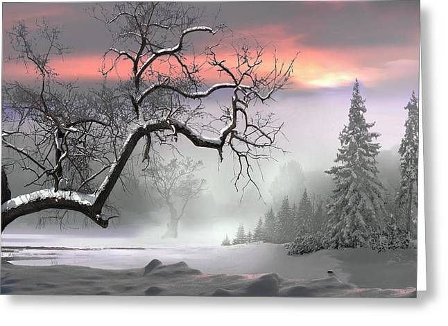 Winter Trees Greeting Card by Igor Zenin