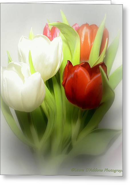 Winter Tulips Greeting Card by Laura DAddona