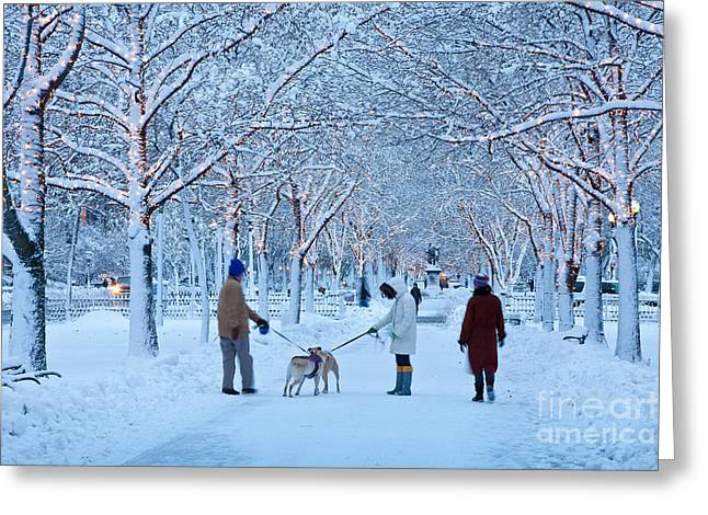 Greeting Card featuring the photograph Winter Twilight Walk by Susan Cole Kelly