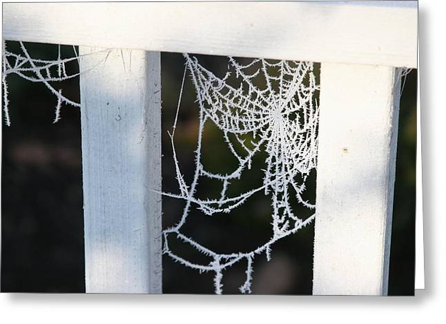 Winter Web Number Two Greeting Card by Paula Tohline Calhoun