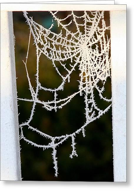 Winter Web Greeting Card