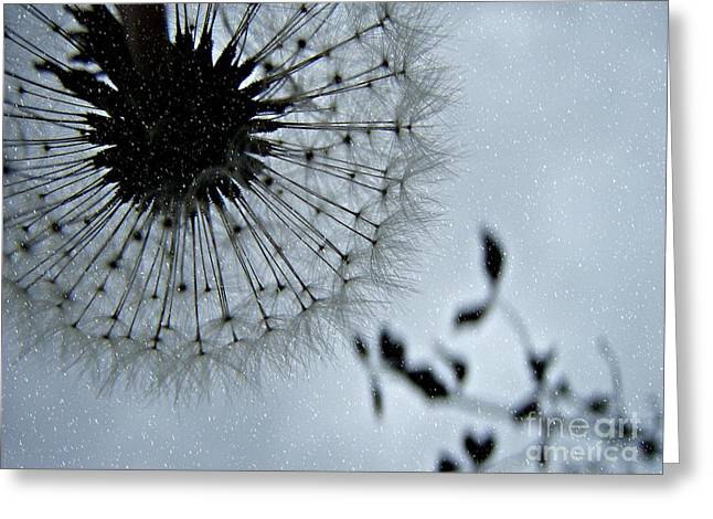 Greeting Card featuring the photograph Winter Wish  by Kristine Nora