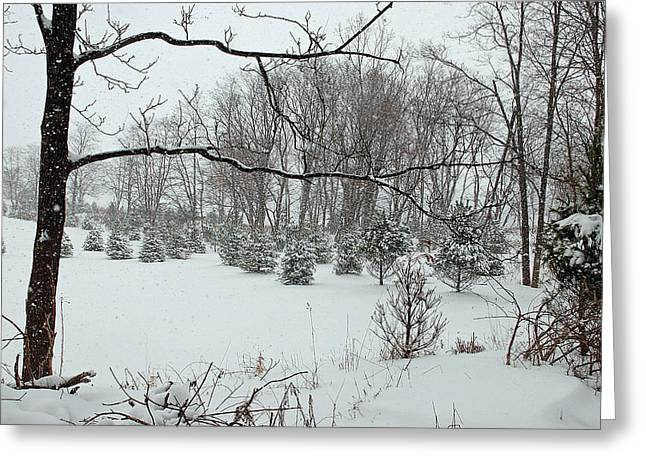 Winter Wonderland Greeting Card by Aimee L Maher Photography and Art Visit ALMGallerydotcom