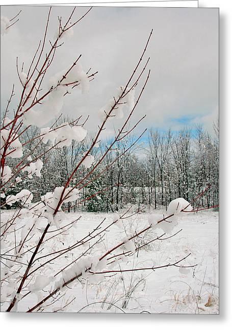 Winter Woods Greeting Card by Joann Vitali